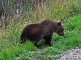 Alaska-Yukon 2009