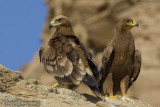 Hybrid Eagle