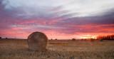 Prairie Harvest Sunrise