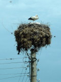 Storks Have a Special Significance to Bulgarians and are Welcomed in Their Villages