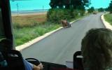 Bulgarian Horse Cart