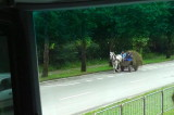 Horse Cart in a Fairly Large City