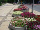 Flowers on a Street in Varna, Bulgaria