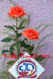 TATC 01.jpg
