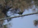 Beutiful sunbird2.jpg
