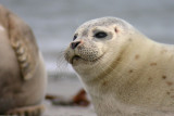 041014 Common seal.jpg