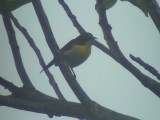 060310 c Handsome sunbird Camp1 Hamut.JPG