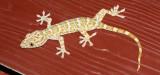 Various animals in Thailand