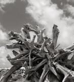 Driftwood, Molokai, 1995
