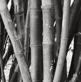 Bamboo and Grafitti, Oahu 1993