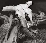 Taos Pueblo Detail (Cow Skull), 2001