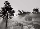 Black Forest Fog, 1998 (driveway)
