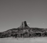 Devil's Tower with Deer, 2000