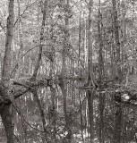 Vernon Parish, Louisiana, 1970