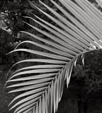 Frond, Big Island, Hawaii, 1992