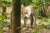 Leopard-6674-1.jpg
