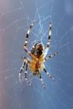 Spider-from-below-406.jpg