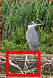 Heron_test1_100.JPG