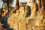 Row of Sphinxex once leading to Karnak