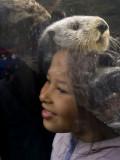 Otter Hat Monterey, California, March 2008