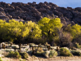 Gallery:: Return to the Alabama Hills:: April 2008