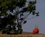 Bright Remembrance Hornitos, California -May 2008