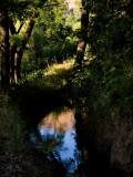 Reflected Color Coloma, California - May 2008