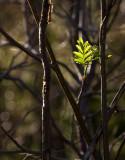 Spring Green Fallen Leaf Lake, Lake Tahoe, California - May 2008