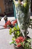 Planted Bouquet