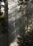 -Controled Burn-    Sequoia National Park, California