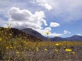 Spring in the Valley - Death Valley, California