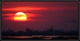 More sunset cranes