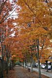 Autumn Colors 2005
