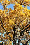 Fall Colors 2004