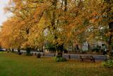 Autumn on the village green