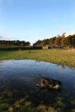 holly puddle dog