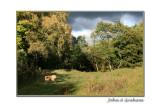 Autumn Ozzy