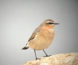 Oiseaux 2012