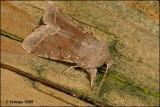 fotoopa 23416 - Orthosia incerta - Variabele voorjaarsuil.
