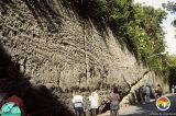 Anastasia Fm Palm Beach Gardens Roadcut 3.jpg