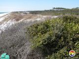 CoastalWalton County.jpg