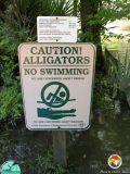Gator sign.jpg
