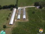 HatchChicken Farm.jpg