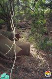 pesticide cans in Eustis sinkhole 3.jpg