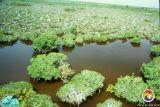 Everglades Mangroves.jpg