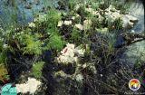 Everglades micro-karst.jpg