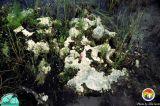 Everglades micro-karst2.jpg