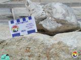 Aturia Alabamensis - HiCal Quarry02.jpg