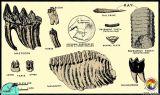 Florida Fossils.jpg