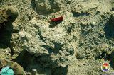 Arcadia Fm fossils.jpg